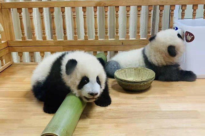 Chengdu Giant Panda Base Half Day Trip