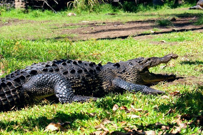 Amazing Crocodiles and Turtles Private Tour