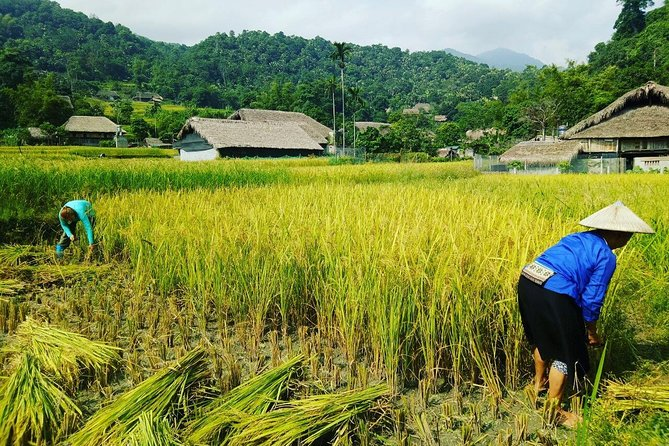 A Day Trip Ha Giang: Farming with Local People