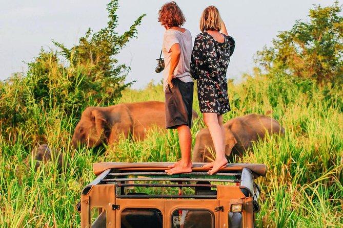 Udawalawa National Park Safari