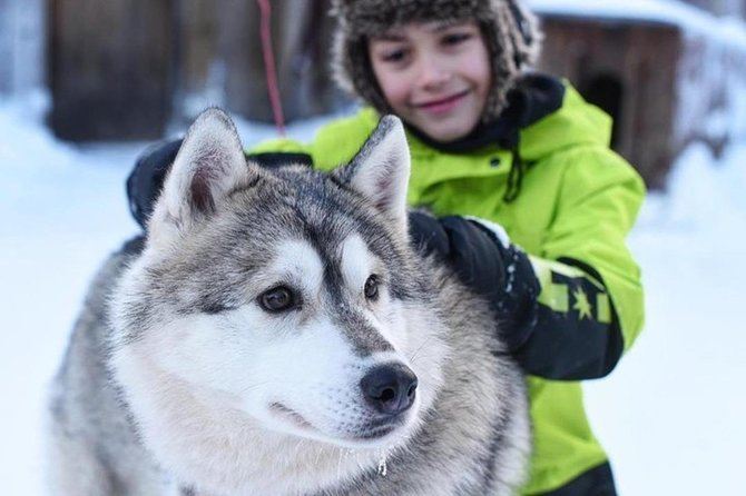 Husky Safari from Levi Including a Husky Sled Ride