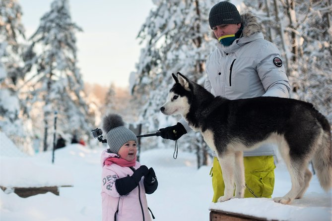 St. Petersburg: Dog Sledding Tour and Russian Lunch