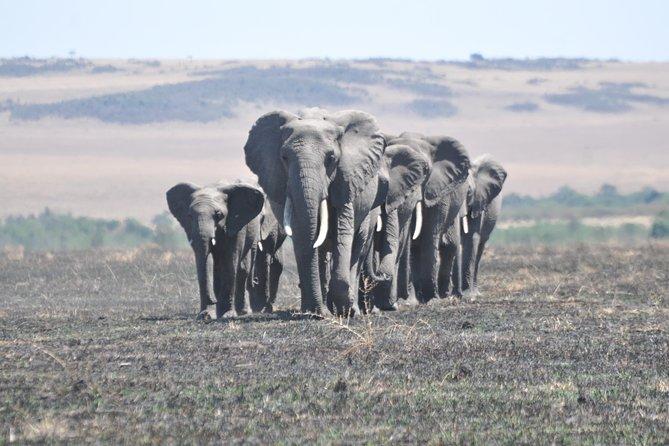 4 Days Masai Mara Giraffe safari-- JEEP SAFARI
