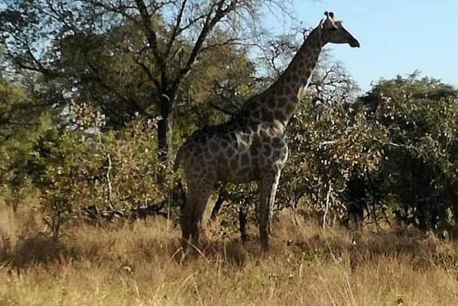 Chobe Day Trip Zambia