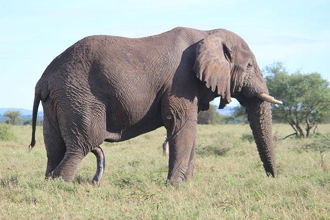 7-Day Premium Luxury Tanzania Safari All-Inclusive