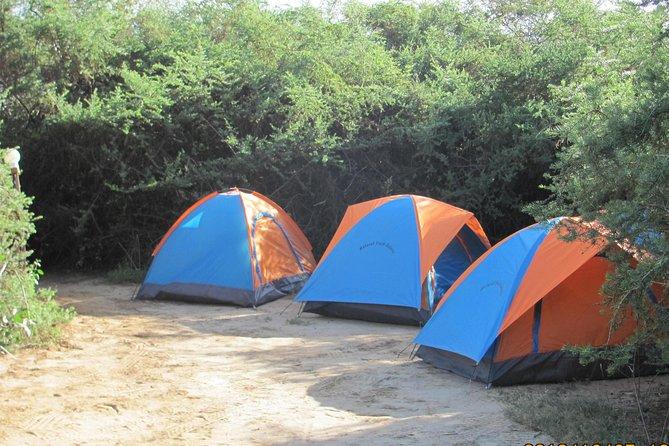 7 Days Budget Camping safari-- JEEP SAFARI