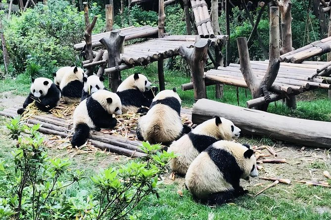 2-day Private Chengdu Classic Tour with Panda Base and Leshan Giant Buddha
