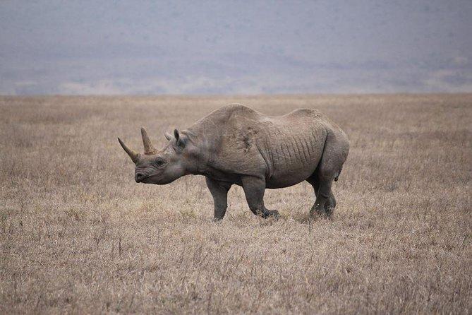 7 Days Wild Tanzania Safari Tour