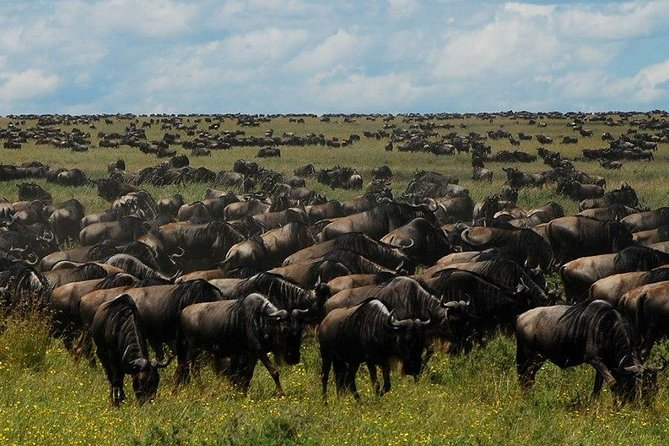 Five Day Wildebeest Migration Green Season Safari (April and May)
