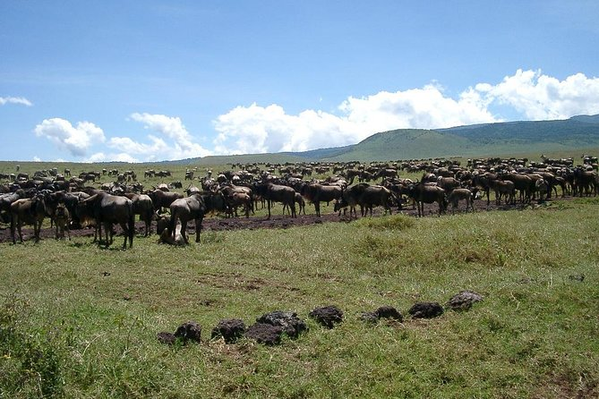 7 Days 6 Nights Walking Safari On Ngorongoro Highlands photo 1