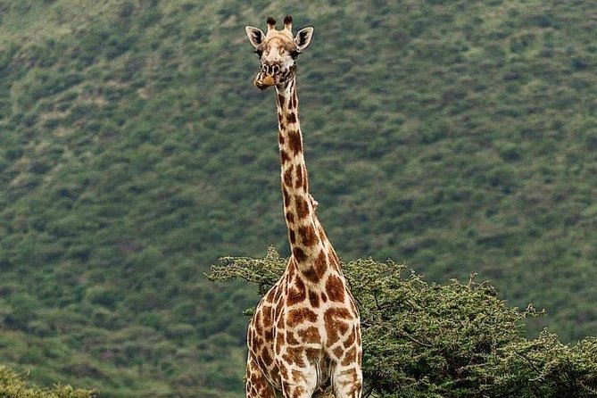 4 Day Camping Safari Serengeti and Ngorongoro