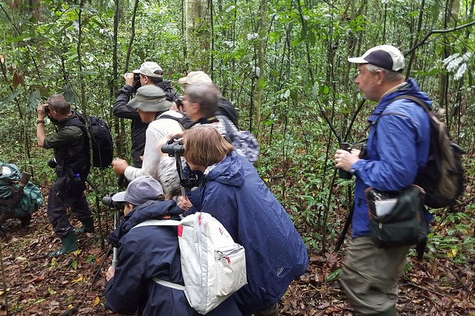 11 Days Birding ,chimpanzee And Gorilla Tour Through Uganda