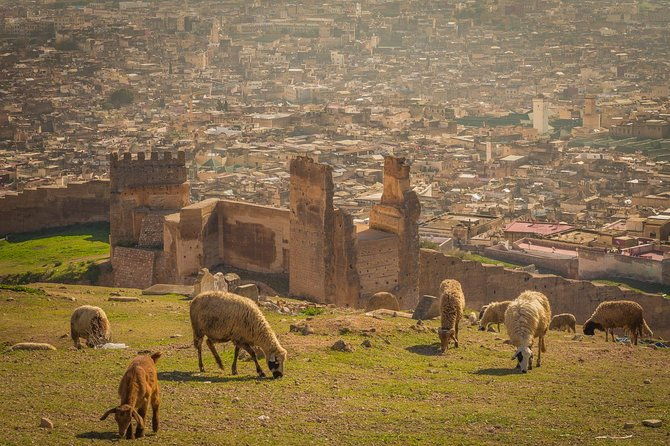 Fes Private Guided Tour