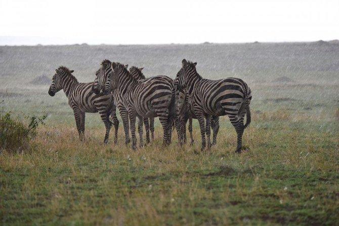 Tanzania Lodge Safari 5 Days- Tarangire Np, Ngorongoro Crater & Serengeti Np