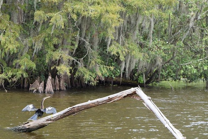 Full Day New Orleans City Tour and Swamp Boat Tour