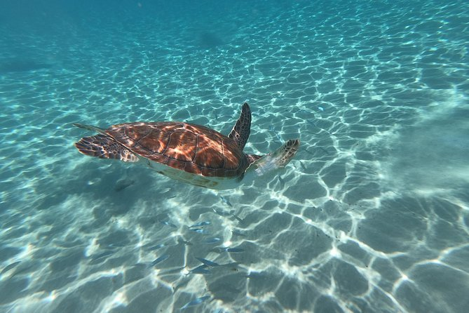 Snorkel with Sea Turtles - The Best way to spend a day in Curacao!