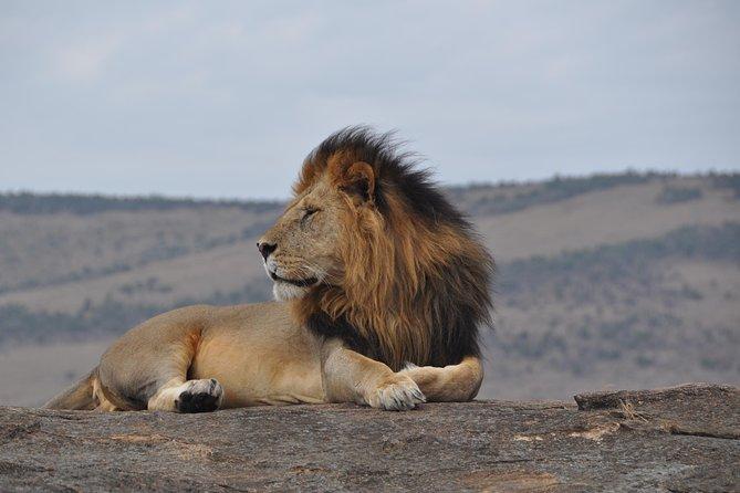 11 days Bush and Beach Kenya safari – JEEP SAFARI