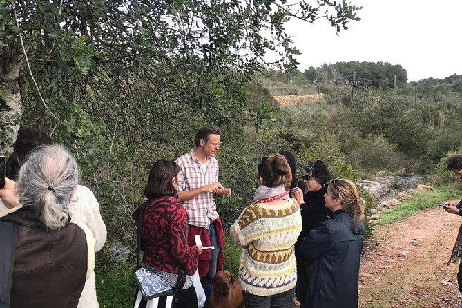 Wild food and medicine foraging walk Ibiza