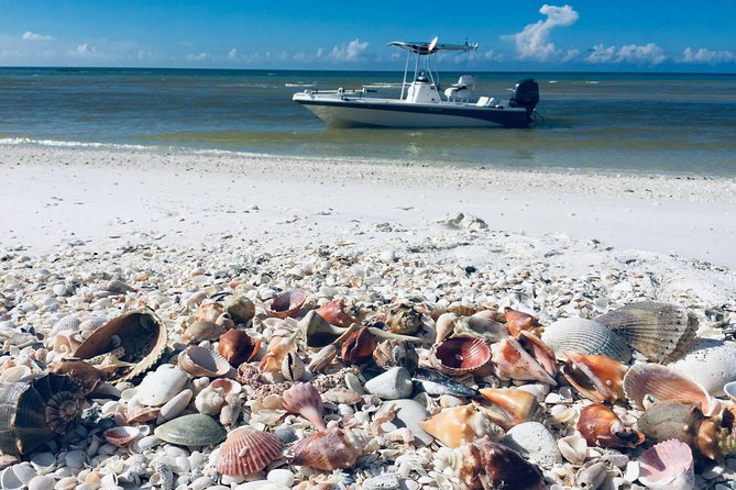 Shelling Tours - Fort Myers Beach / Estero Bay