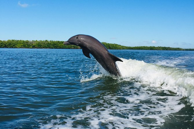 Dolphin Tours - Fort Myers Beach / Estero Bay photo 7