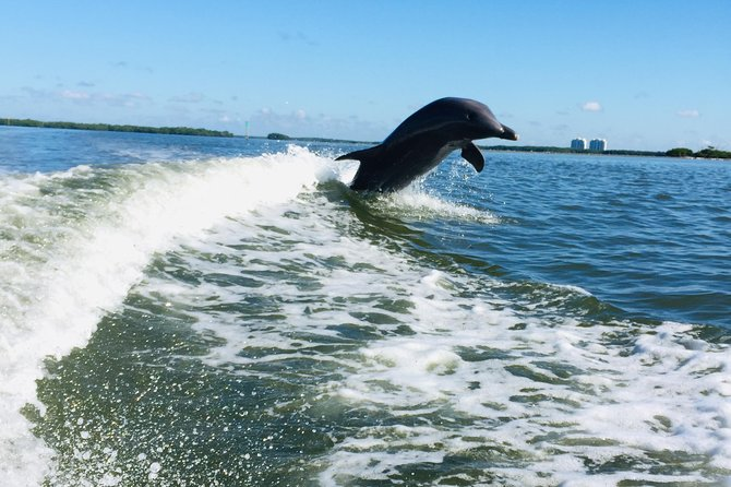 Dolphin Tours - Fort Myers Beach / Estero Bay photo 19