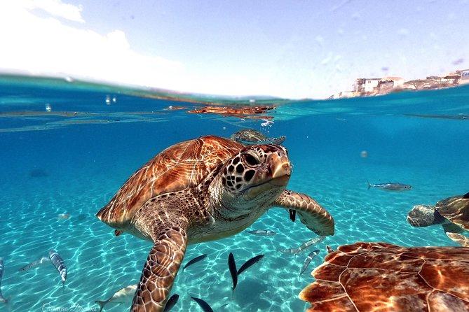 Nadar com tartarugas marinhas incl. As fotos