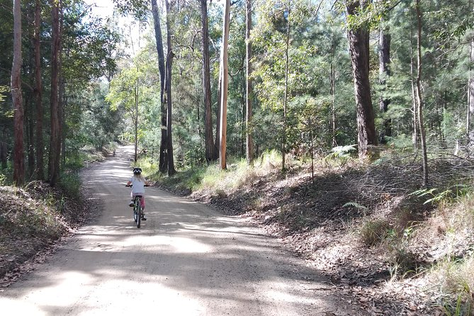 Noosa Hinterland Scenic FAT Bike & Abseil Tour