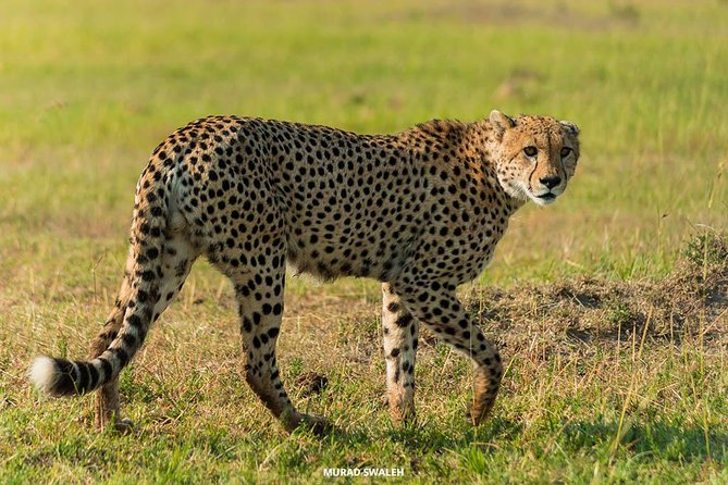 4 Days Wildlife Lodge Safari Tour in Kenya photo 4