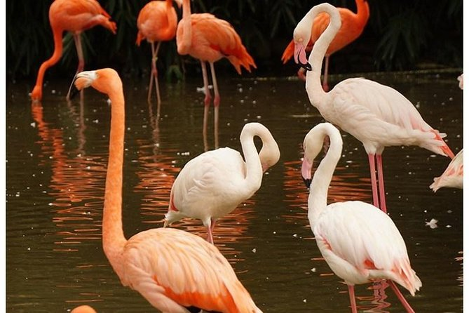 5 Days Flamingo and Wildlife Safari in Kenya