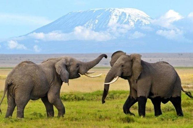 3 Days 2 Nights Amboseli Safari