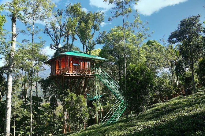 Treehouse stay in munnar