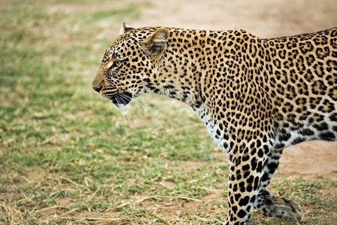 8 days, 7 nights budget Kenya and Tanzania safari