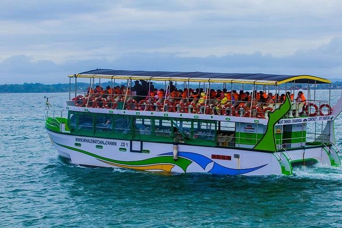 Whales & Dolphin Watching Day Tour From Bentota