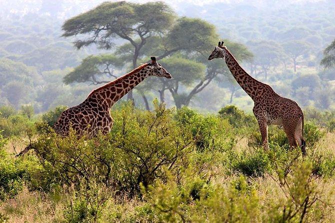 Day Tour Safari Arusha National Park