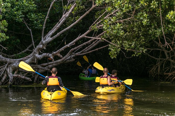 Rainforest Nature Walk & Bio Bay Night Kayaking Combo with Transportation photo 8