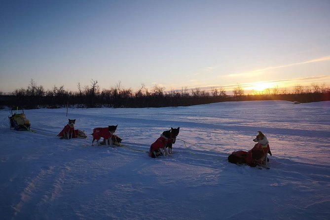 Sled trip with husky in the alta valley