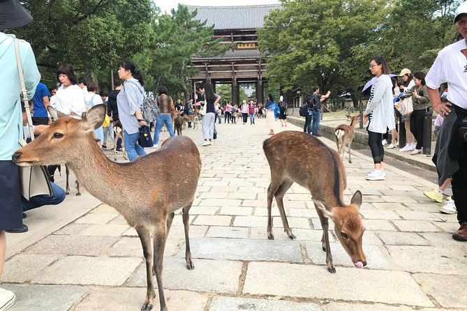 Half Day NARA Custom Tour by Private Car and Driver