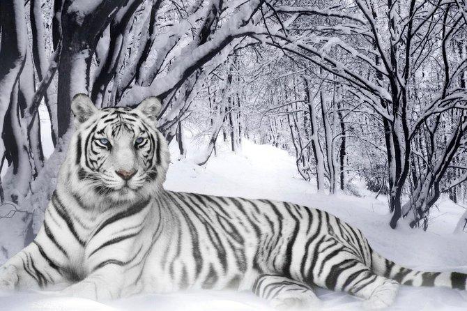 Safari At Panna Tiger Reserve, Jeep Safari At Panna Tiger Reserve, Panna Tiger.
