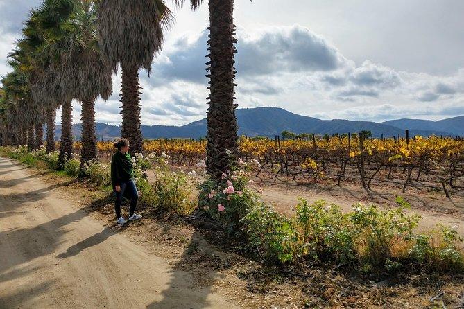 White House Valley Viñas Bodegas RE & William Cole