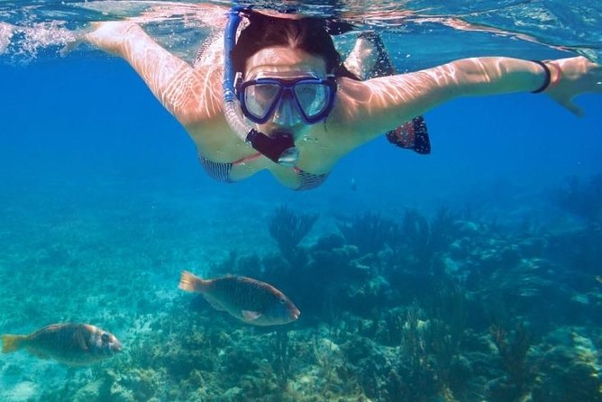 Half Day Swim, Snorkel, Sightseeing of Nassau Harbour end to end