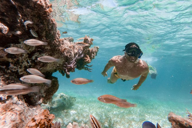 Marinarium-Schnorchelbootstour ab Punta Cana