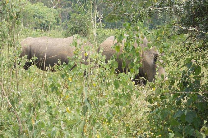 2 Days Murchison Falls Big 5 Savannah wildlife safari