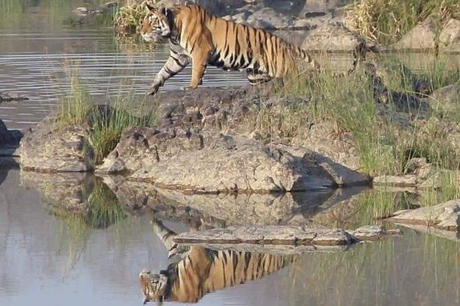 Jungle Safari At Panna Tiger Reserve, Jeep Safari At Panna Tiger Reserve.