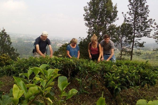 amazing view tea Plantation