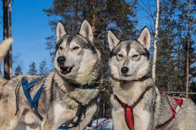 Lapland Reindeer and Husky Safari from Levi