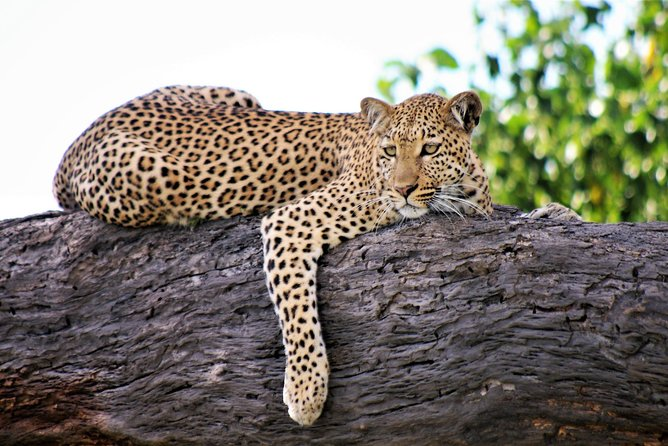 13-Day Kenya and Tanzania Adventure Camping Tour from Nairobi photo 6