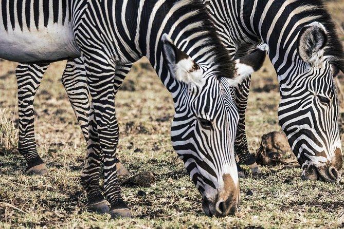 The Classic Samburu Safari