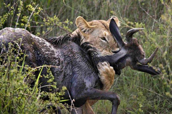 7 Days Exceptional Kenya and Tanzania Safari