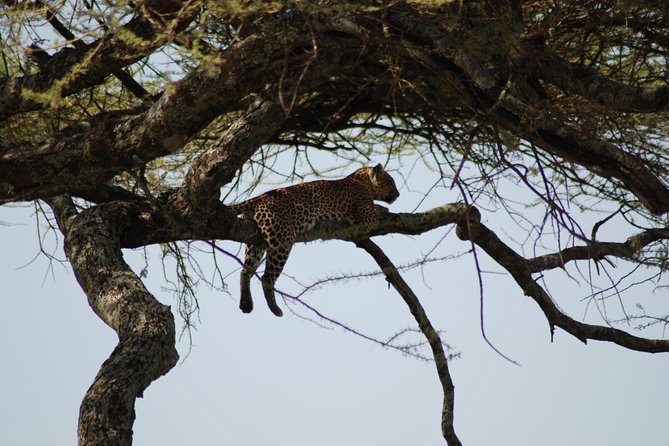5 Days Safaris Join A Group From Mwanza To Arusha