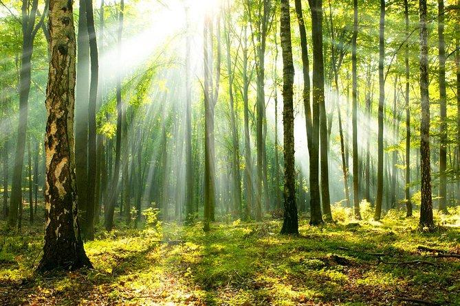 sLOVEnia FOREST BATHING / SHINRIN YOKU